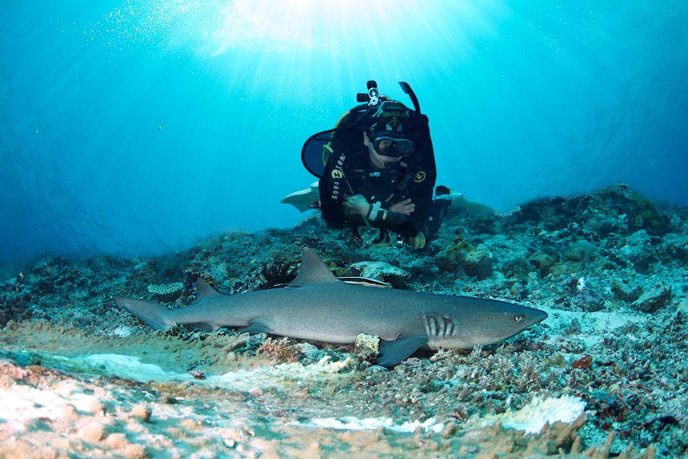 Diving, Mabul, Kapalai, Sipadan April 12-22 2013: www.mantart.eu/divesites/malaysia/mabul-kapalai-sipadan-siamil